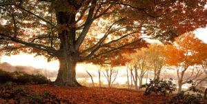 Dawn's Majesty by Joe Standart